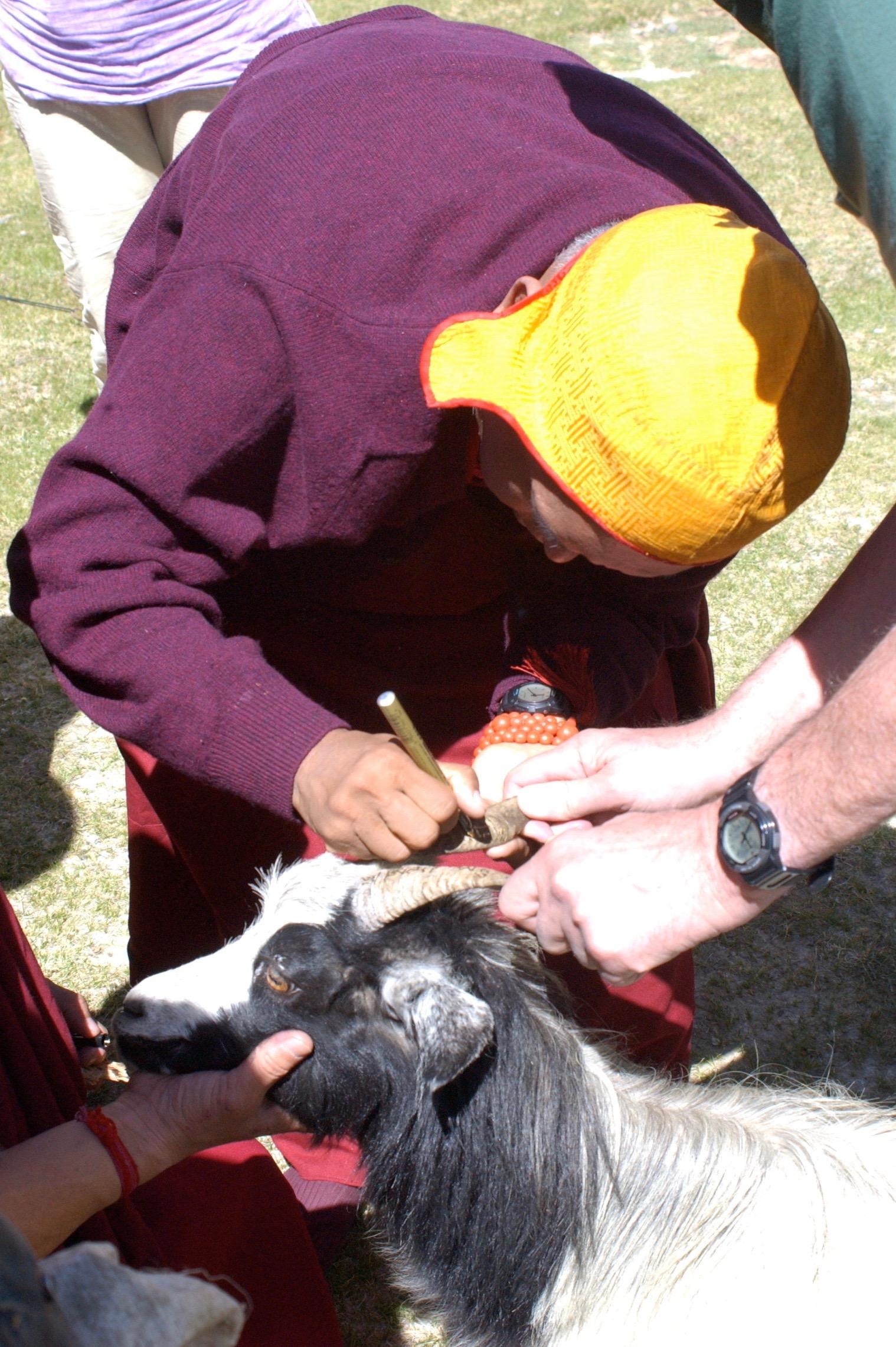 Writing blessed mantra on a goat's horns, Tingri, Tibet. (Photo Bob Cayton)
