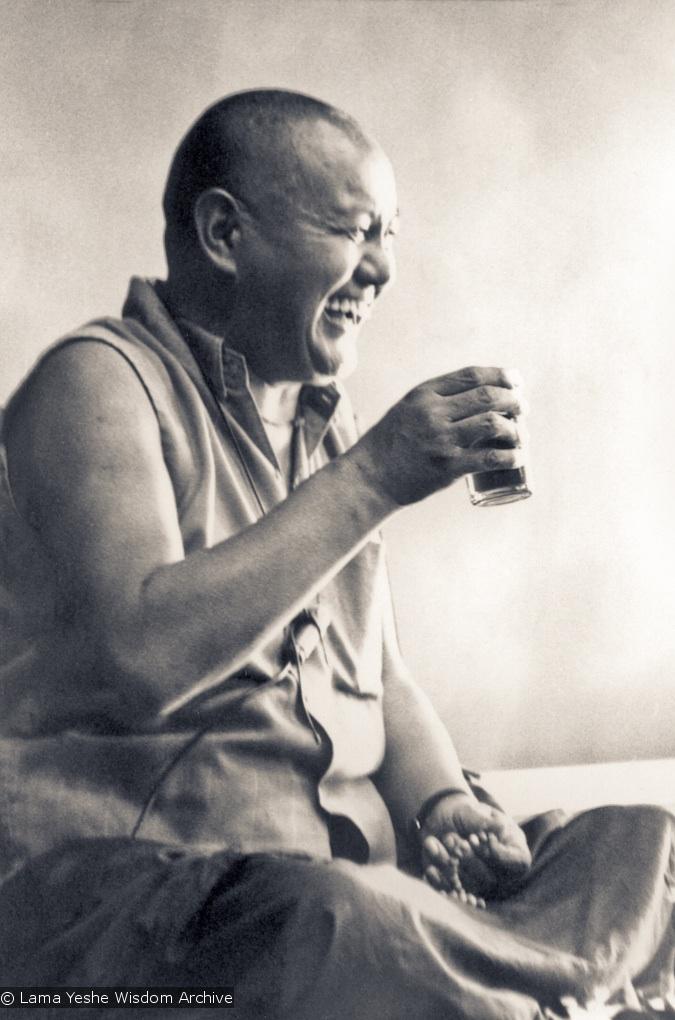 Lama laughing